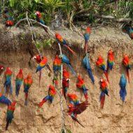 macawfullday